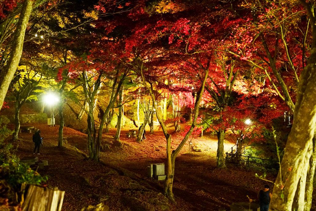 笠置もみじ公園のライトアップの写真