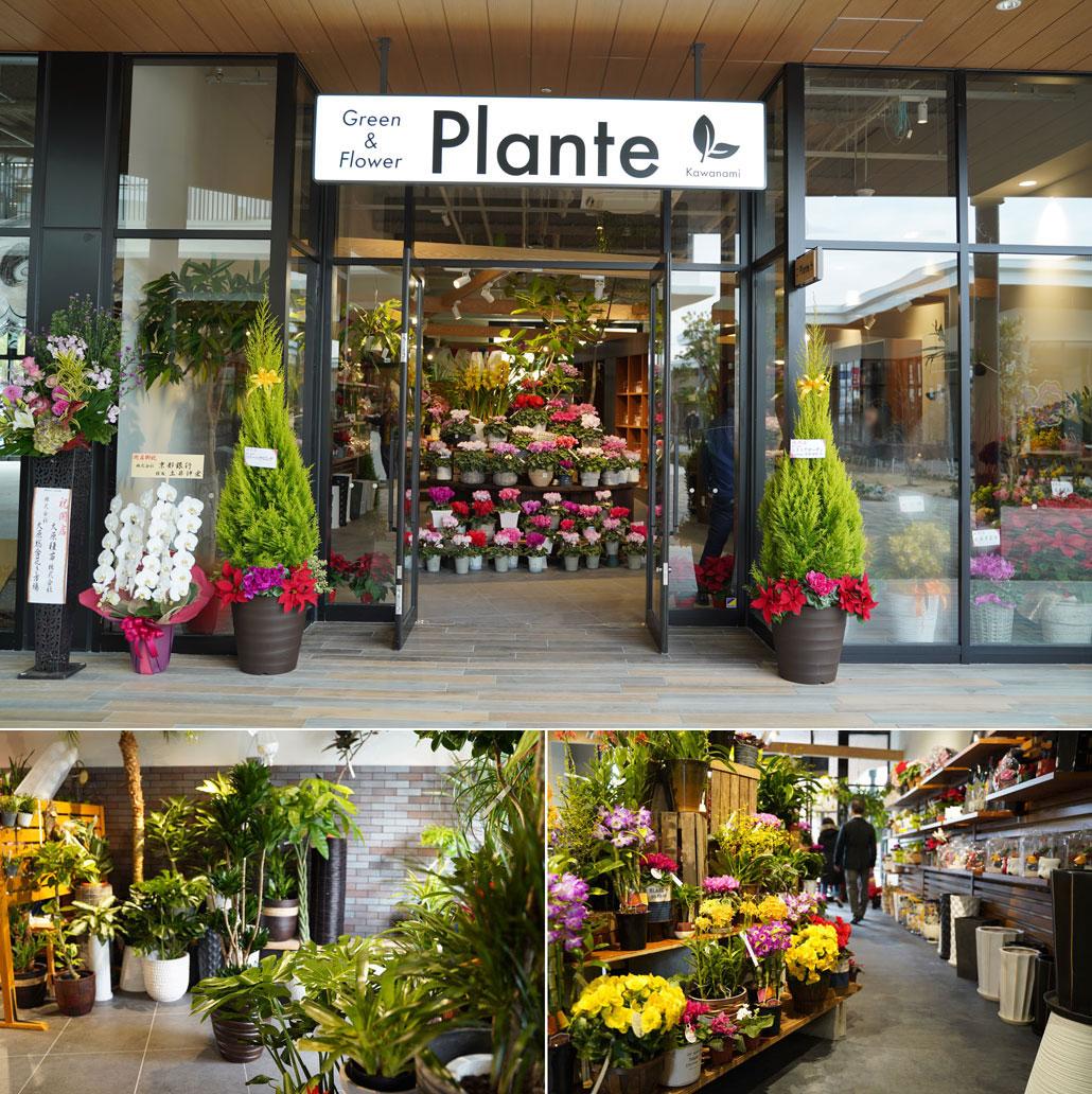 planteの写真