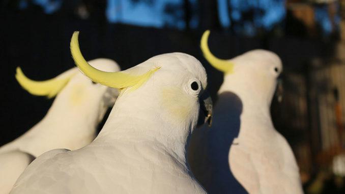 鳥たちの画像