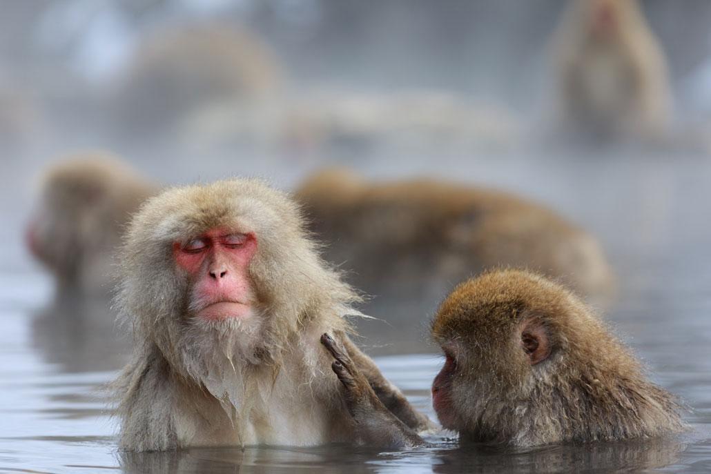 温まるお猿さんの画像