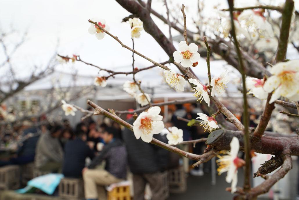 城陽酒造「春の蔵開きまつり2019」の写真1