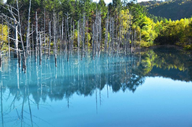 美瑛 青い池
