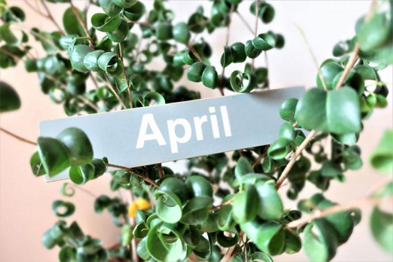 4月の写真