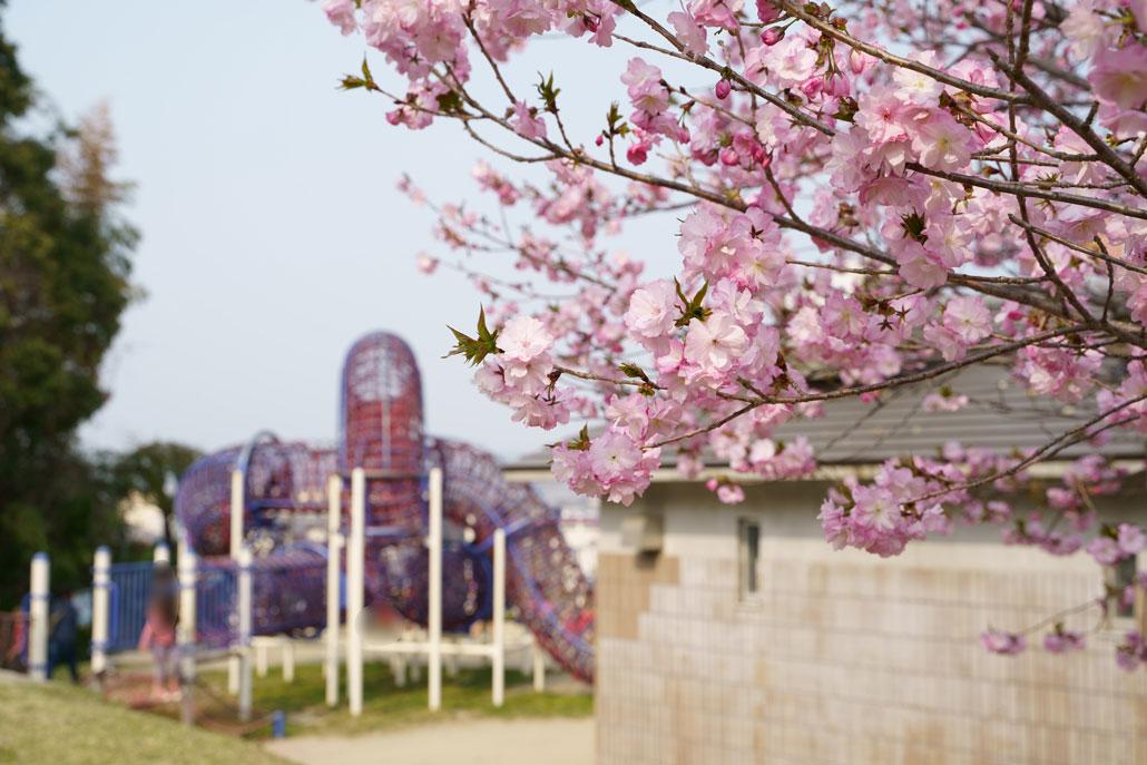 田辺公園の写真2