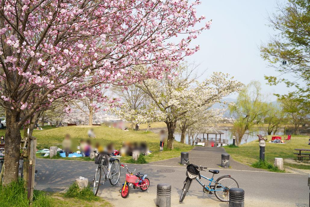 田辺公園の写真3