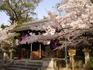 チョビさんの写真・許波多神社