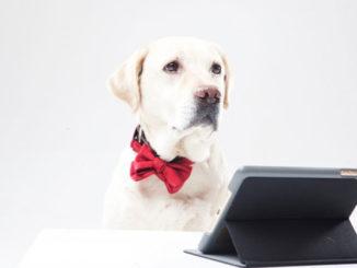 賢そうな犬の画像