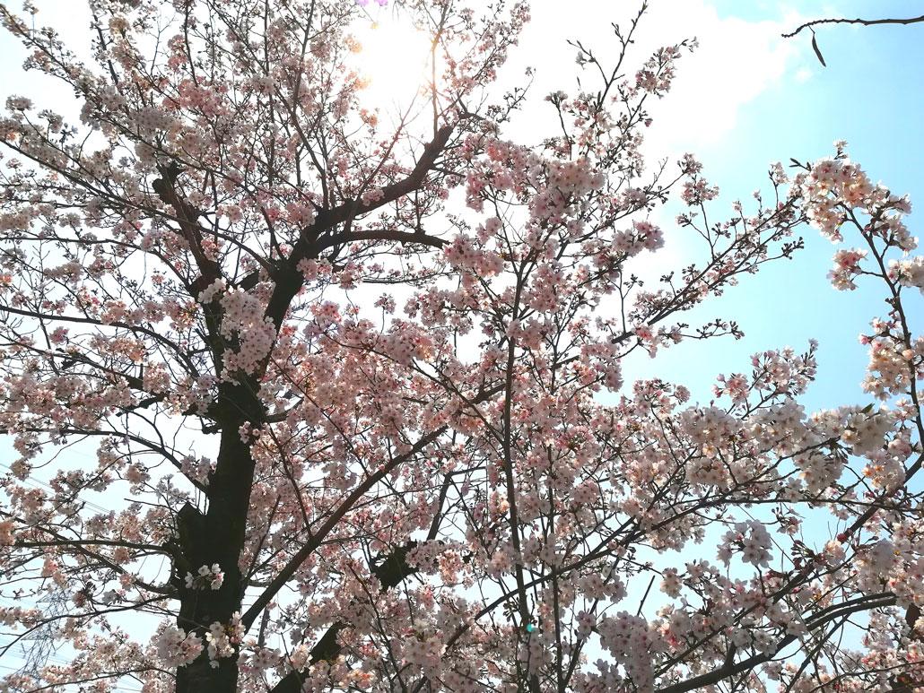 momongaさんの写真・文化パルク城陽近く