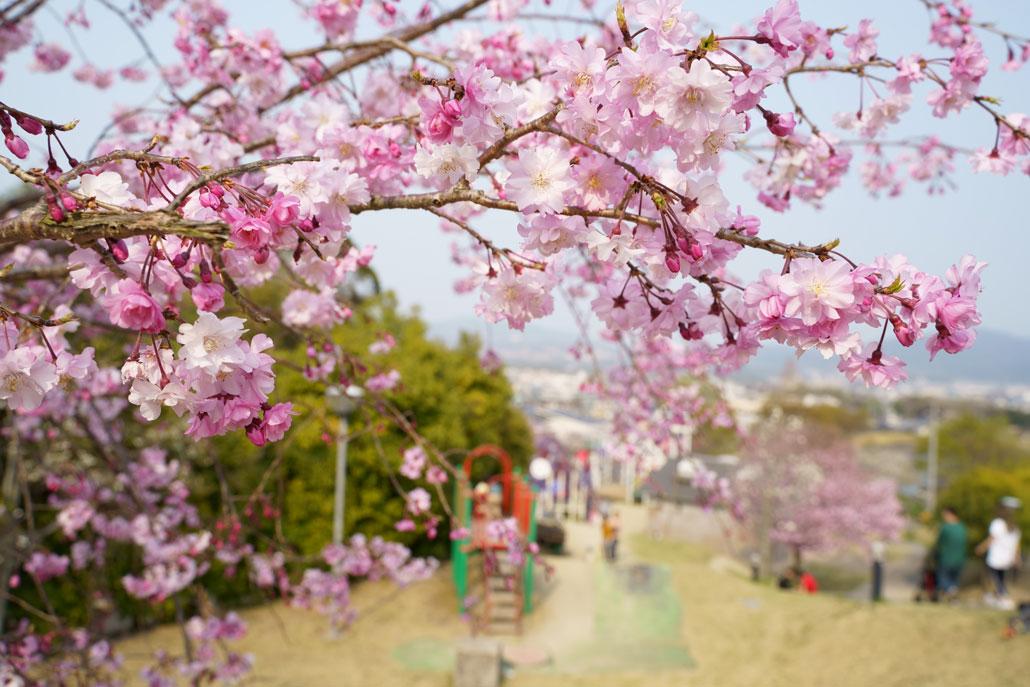 田辺公園の写真1