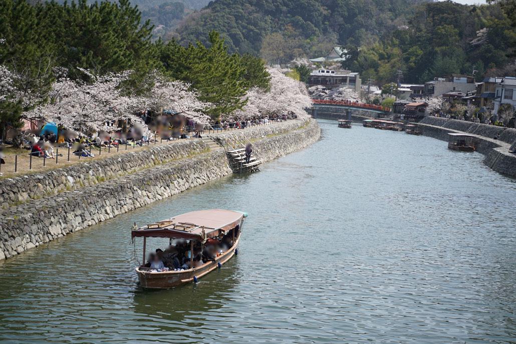 宇治川さくらまつりの写真1