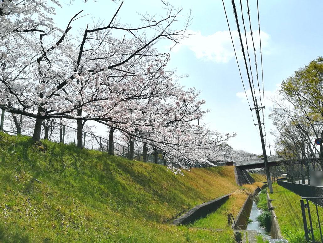 サクサクさんの写真・鴻ノ巣山運動公園グラウンド