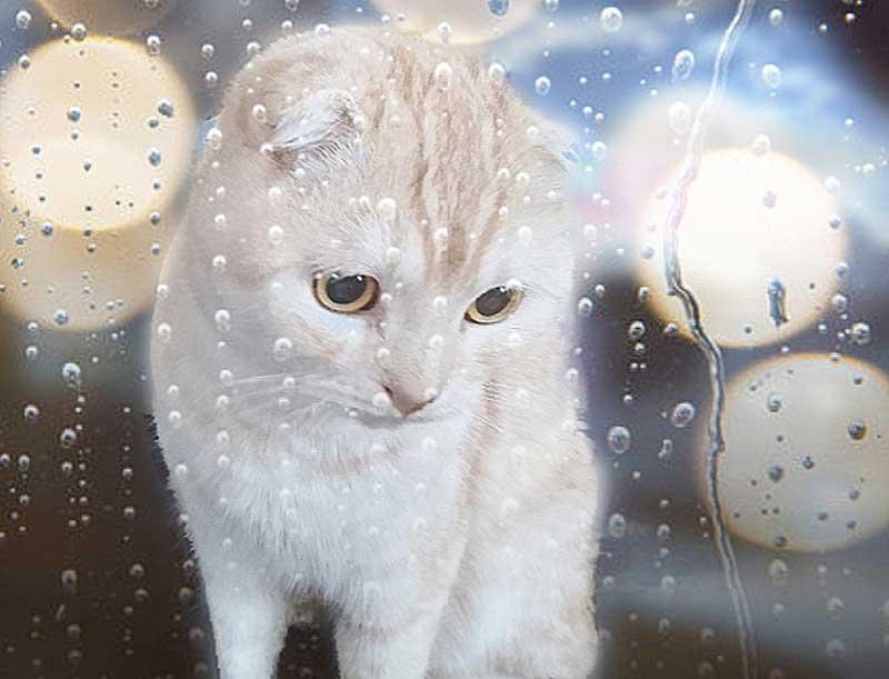 雨。というか猫の画像