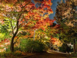 宇治市植物公園紅葉