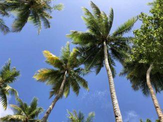 南の島の画像