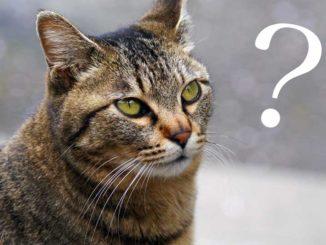 ハテナと猫の画像