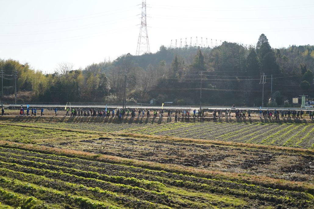 田んぼで竹を運んでいる画像