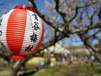 京都城陽青谷梅まつり