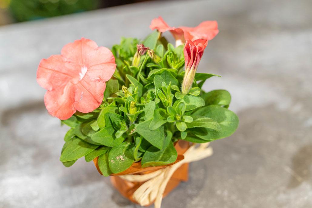「花和商店」プレゼント画像