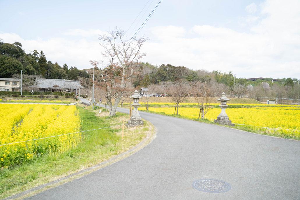 「普賢寺菜の花畑」の画像2
