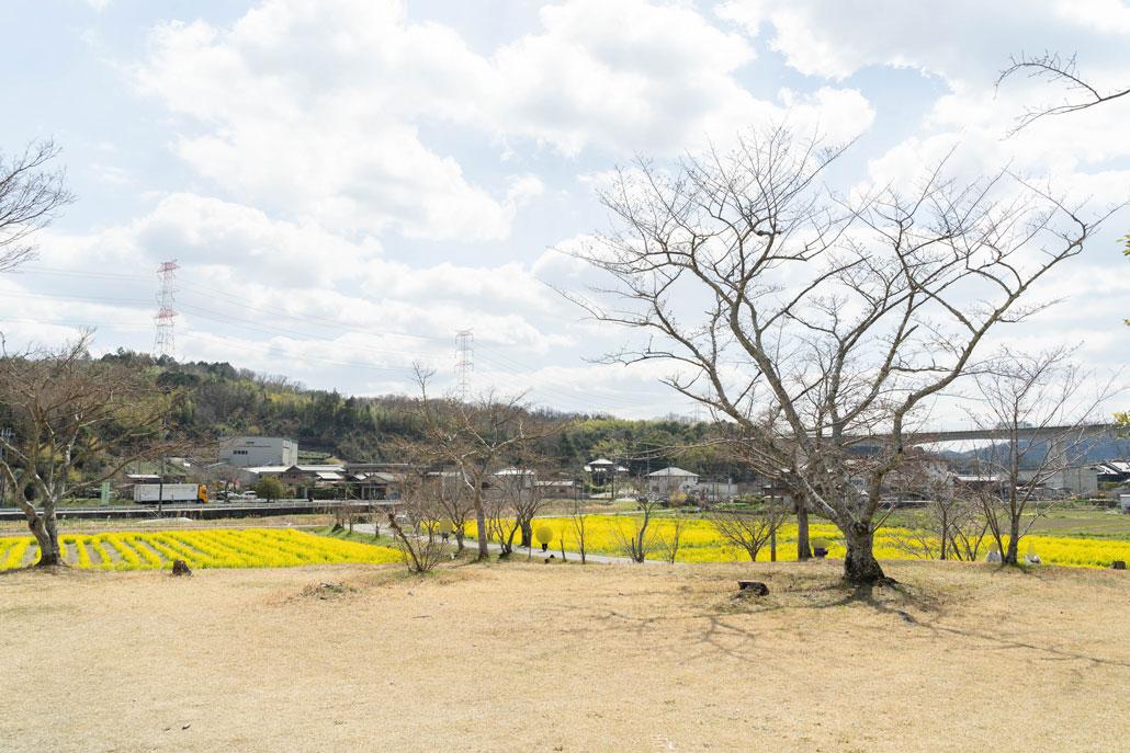 「普賢寺菜の花畑」の画像5