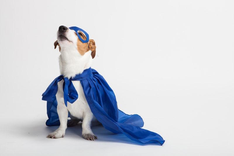 ヒーロー犬の画像