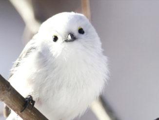 野鳥の画像