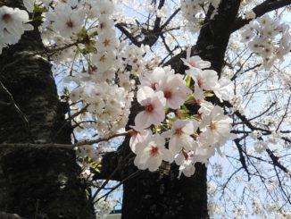 春盛りの画像