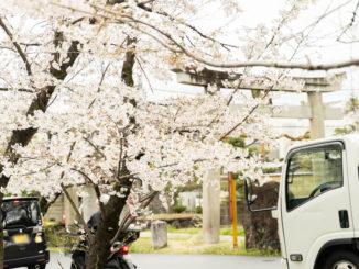 水度神社の桜2020年の画像1