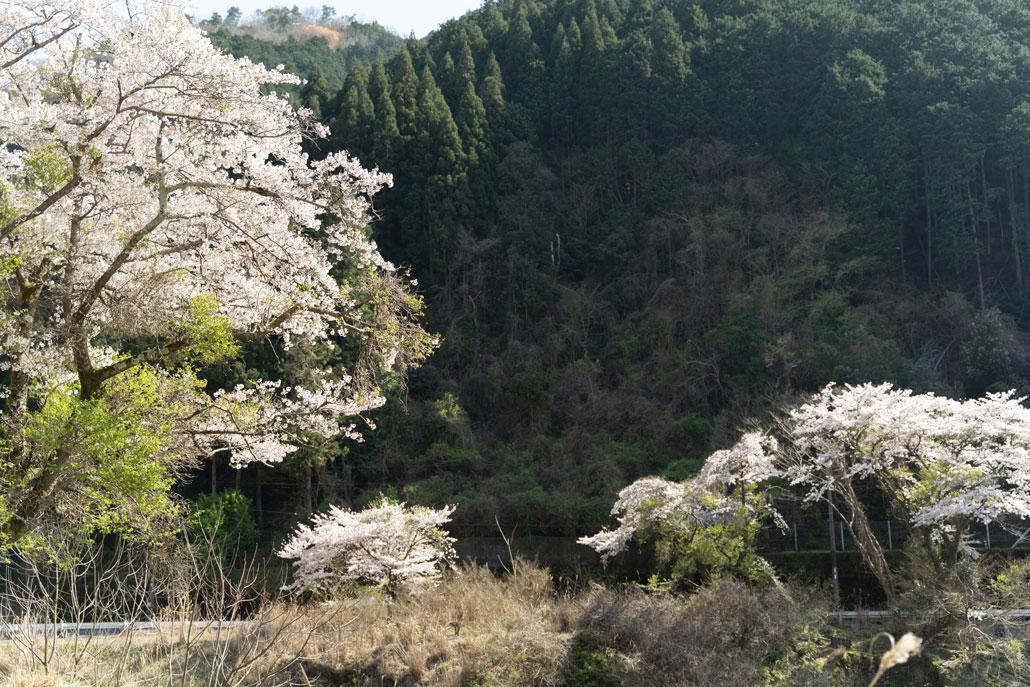 宇治川ライン沿いから見た風景2