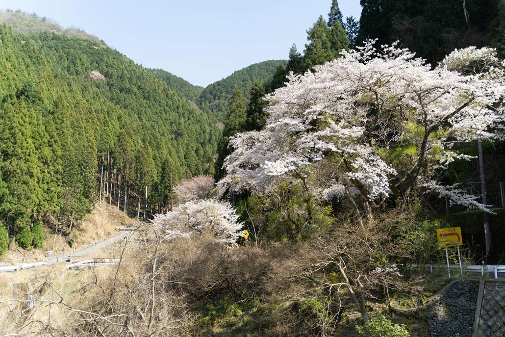 宇治川ライン沿いから見た風景3