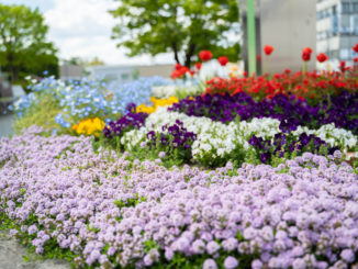宇治市役所の花壇の画像1