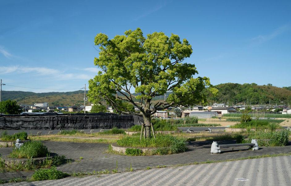 やすらぎ公園の画像2
