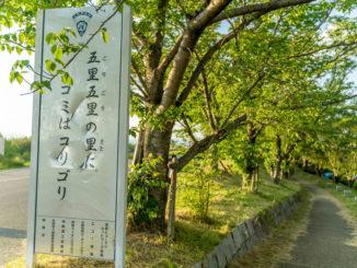 木津川堤防周辺の画像1