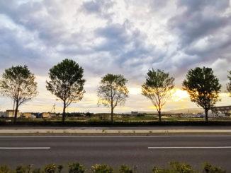 並木の画像 5月20日撮影