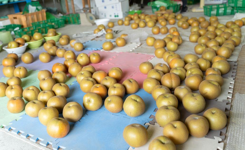 八幡の梨の画像1
