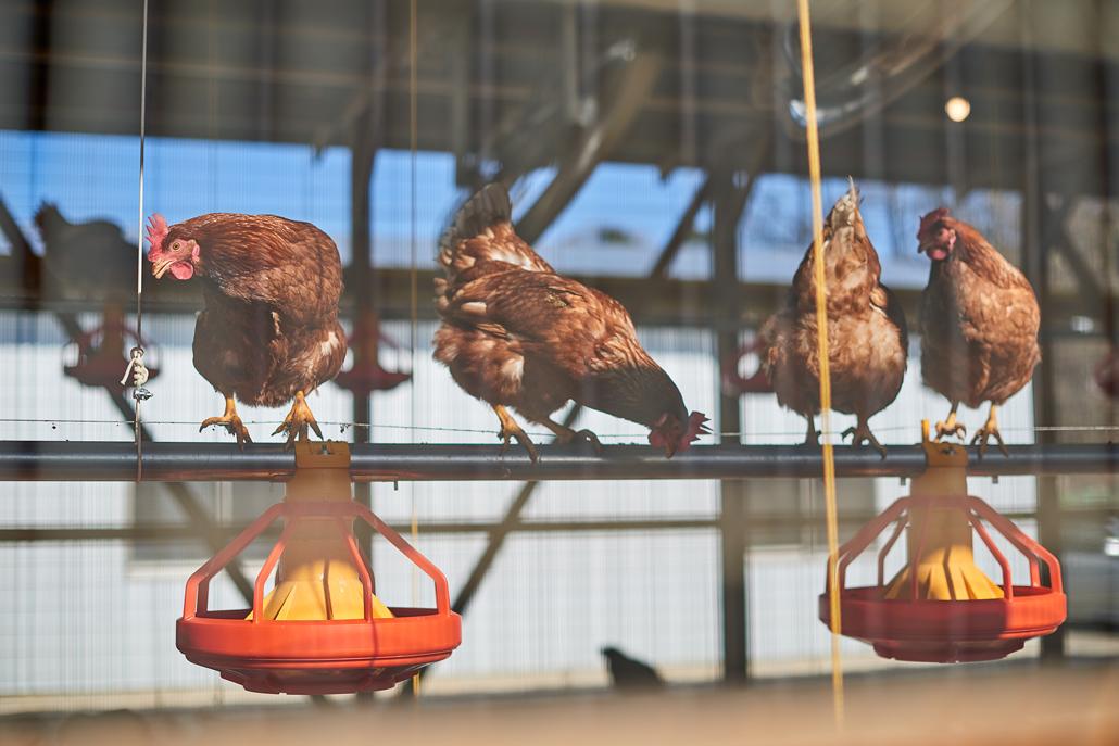 養鶏場の画像2