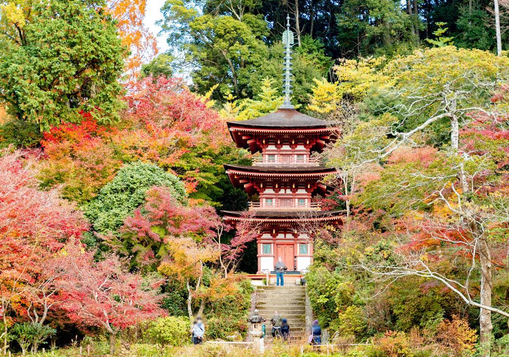浄瑠璃寺の画像