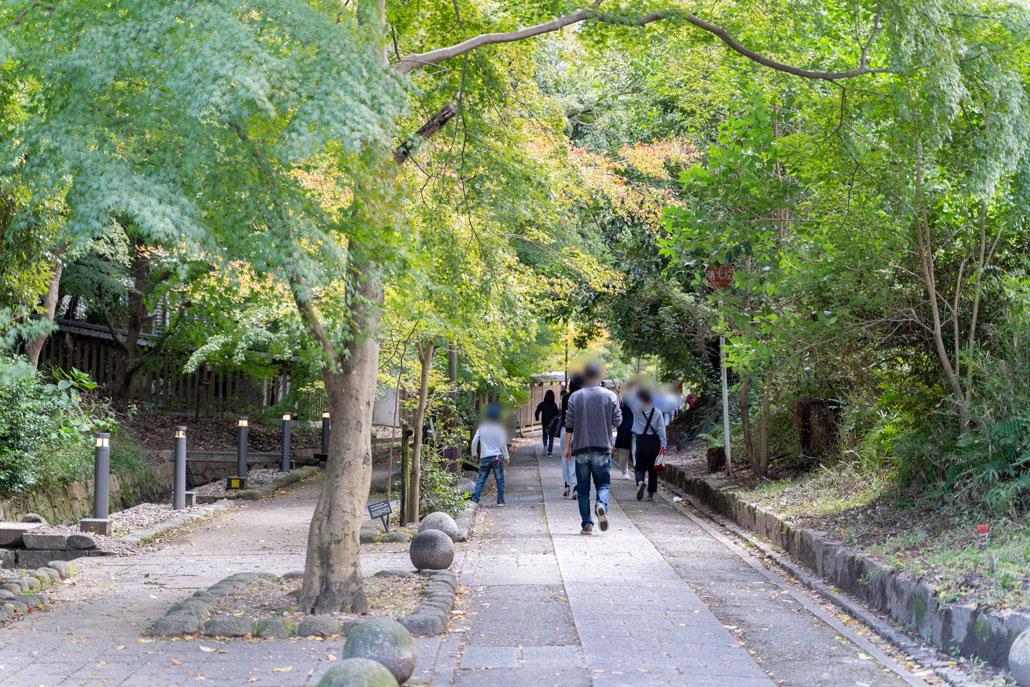 さわらびの道の画像