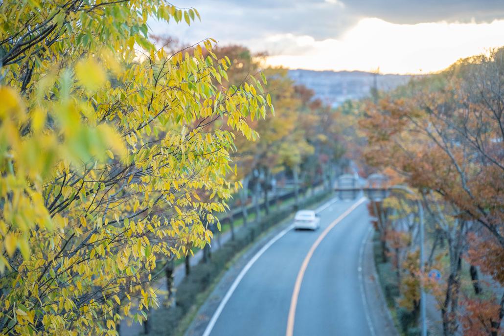 紅葉している風景の画像