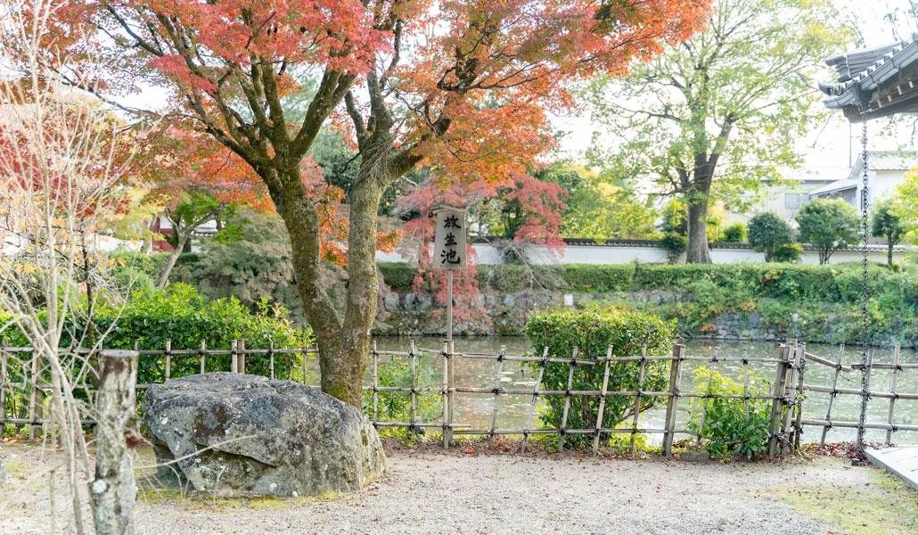 「放生池」の画像