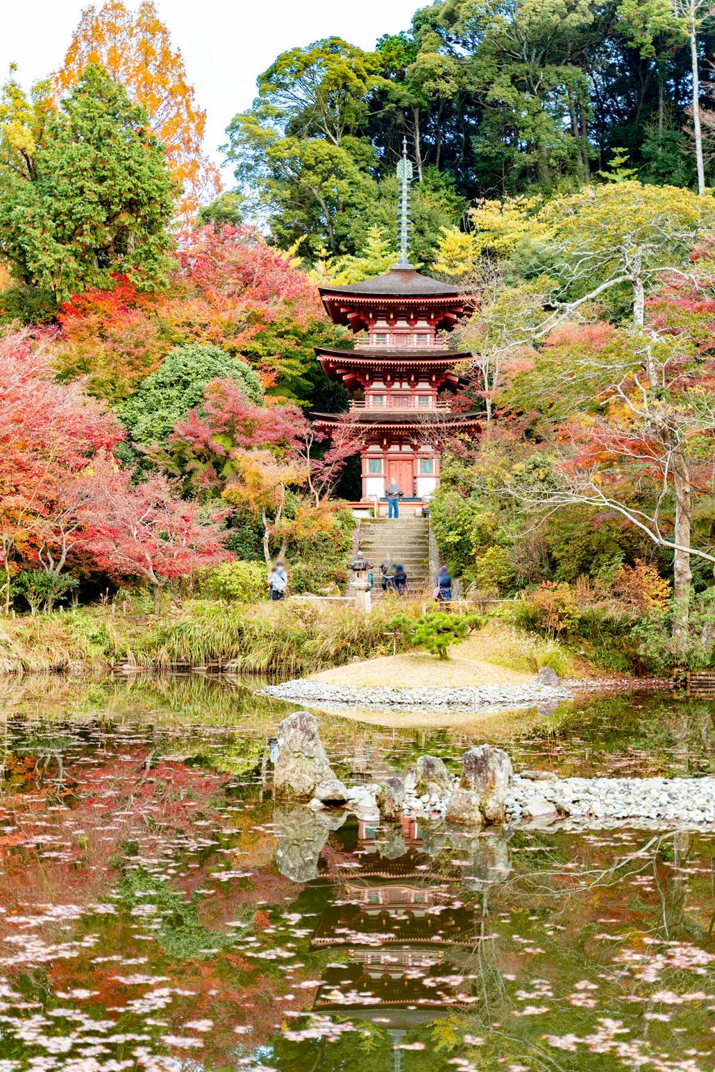 2020年11月22日浄瑠璃寺の画像