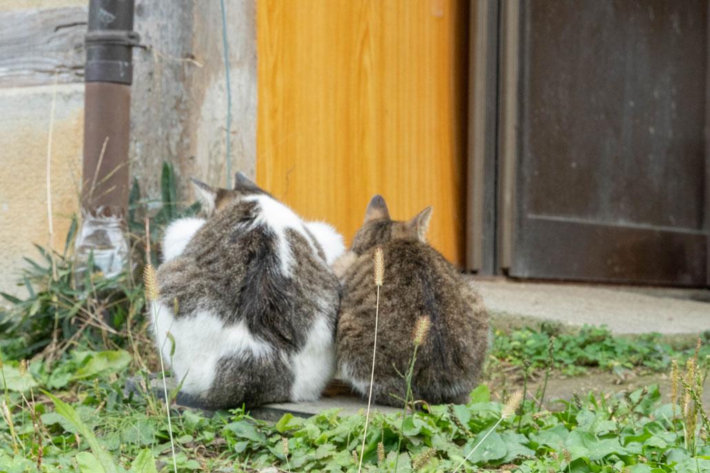 2020年11月22日浄瑠璃寺周辺の2匹の猫の画像
