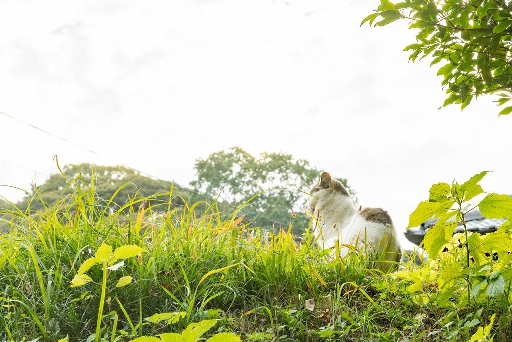 2020年11月22日浄瑠璃寺周辺の猫の画像