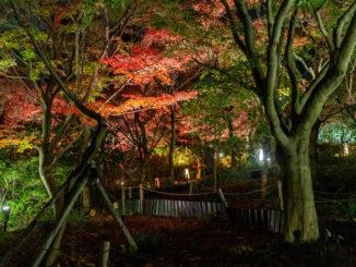 「宇治市植物公園 2020年 紅葉のライトアップ」の画像1