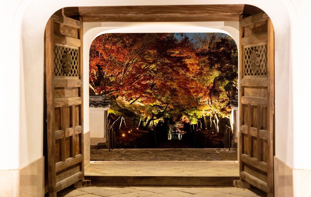 興聖寺の紅葉のライトアップ画像2