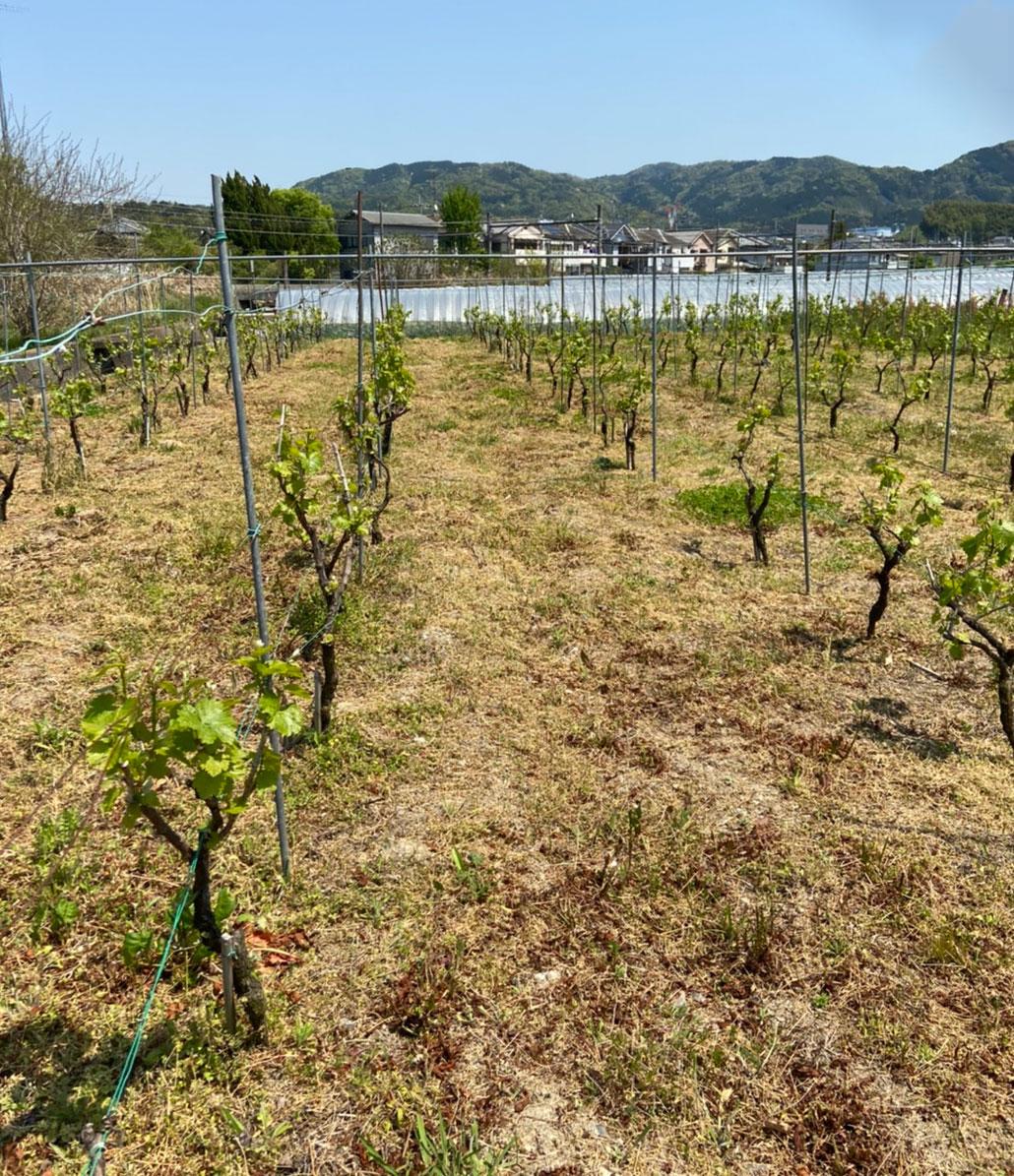 城陽ワインの画像3