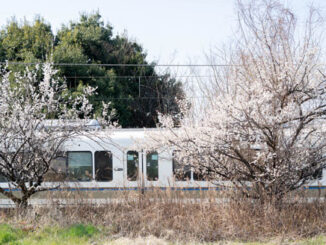青谷の梅と電車の画像