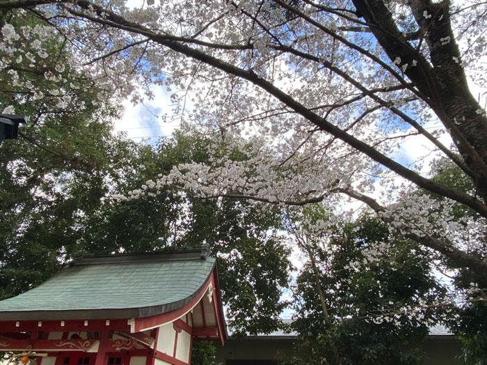 2021年3月24日、若王子稲荷神社で撮影のぷにーの嫁さんの画像1