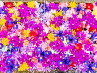 「興聖寺」花手水の画像1の画像1