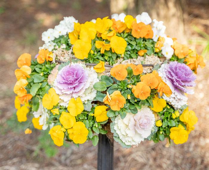 鉢の花の画像